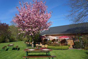 Gasthof-Dahms-Gartenterasse-Ansicht-Garten